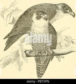 The museum of natural history, with introductory essay on the natural history of the primeval world : being a popular account of the structure, habits, and classification of the various departments of the animal kingdom, quadrupeds, birds, reptiles, fishes, shells, and insects, including the insects destructive to agriculture - Stock Photo