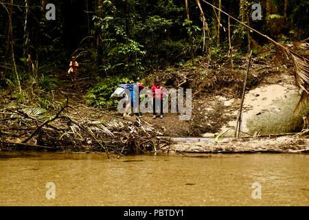 A man and two children near a rainforest stream, Kauri Creek walk, Jungal Jungal, Danbulla, Tablelands Region, Far North Queensland, Australia - Stock Photo