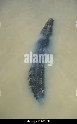 SALTWATER CROCODILE, CROCDYLUS POROSUS, ADELAIDE RIVER, NORTHERN TERRITORY, AUSTRALIA - Stock Photo