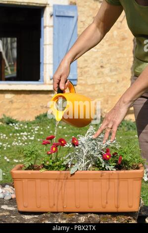 Preparation and planting of a window flower pot - Stock Photo