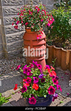A recycled or up-cycled chimney pot now used to display a beautiful purple & red fuchsia with a further pot of lovely purple & red petunias in front - Stock Photo