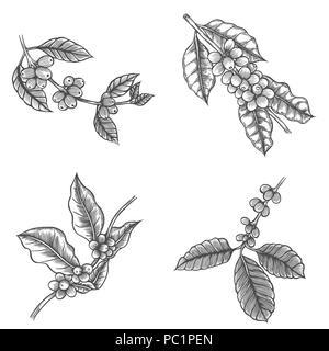 Coffee tree drawing illustration black and white with line art coffee tree illustration engraved style illustration vintage image style stock photo altavistaventures Gallery