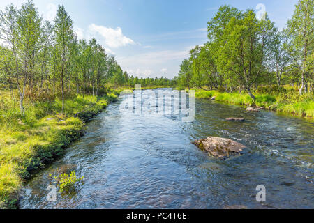 River flowing through a beautiful birch forest - Stock Photo