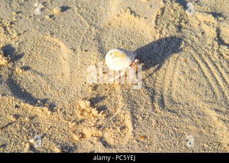 Hermit crab on beach in Eygpt, crab running in sand - Stock Photo