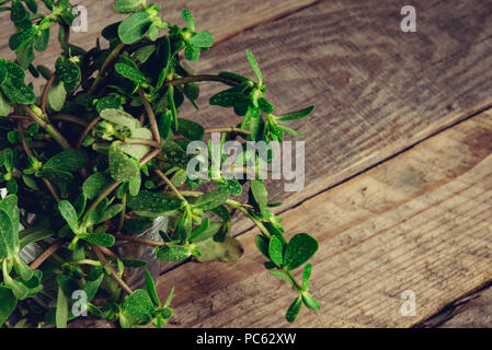 Sesuvium portulacastrum (shoreline purslane, sea purslane) ; sprawling grows in coastal areas. Green leaves thick, smooth, fleshy and glossy that are  - Stock Photo