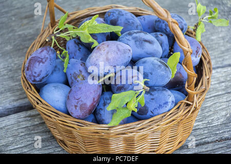Plums in a wicker basket on the wooden background - Stock Photo