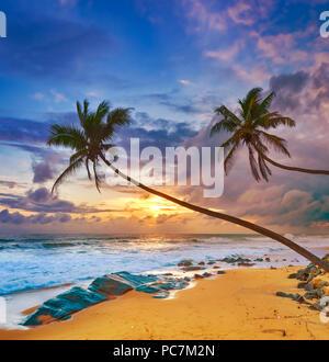 Sunset over the sea. Palmtrees on the foreground. Amazing landscape. Sri Lanka - Stock Photo