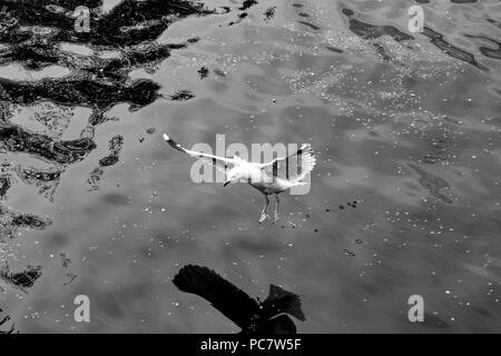 Birds in canals of Amsterdam, Netherlands - Stock Photo