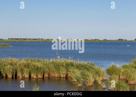 Delta de l'Ebre natural Park from Catalonia, river with plants view - Stock Photo