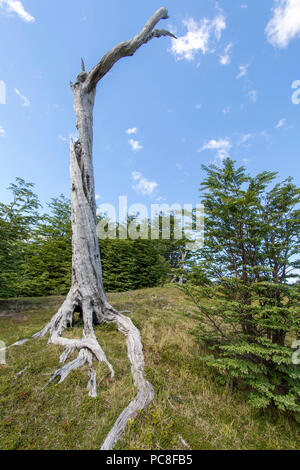 Dead tree trunk on a hill in Ushuia Argentina - Stock Photo