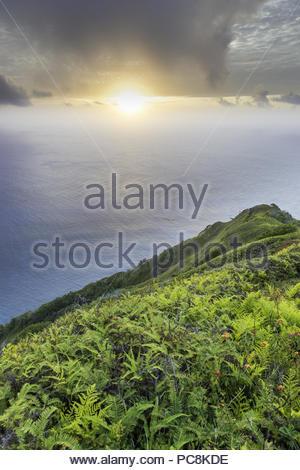 Wild lantana growing on the steep slopes near Highest Point. - Stock Photo