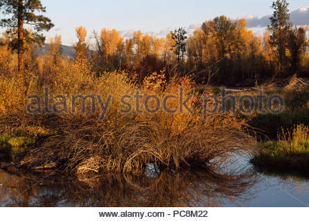Autumn hued trees and grasses along a waterway. - Stock Photo