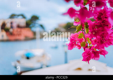 Kefalonia Greece Assos village. Magenta fuchsia with blurred fishing boat in tranquil bay in background. - Stock Photo