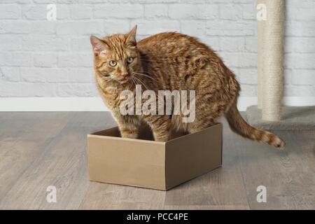 Cute ginger cat in cardboard box, looking sideways. - Stock Photo