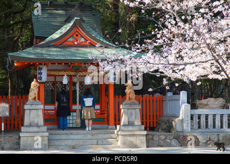 Cherry blossom at Ikuta Jinja shrine, Kobe, Kansai, Japan, Asia - Stock Photo