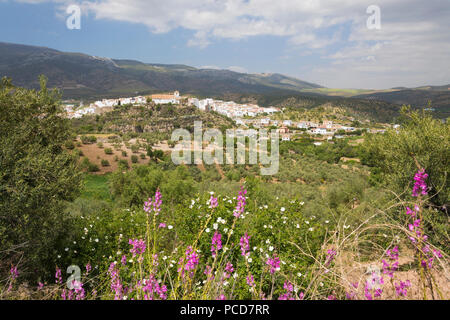 View in spring over the white Andalucian village of El Burgo, Malaga Province, Andalucia, Spain, Europe - Stock Photo