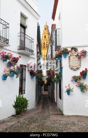 Calleja de las Flores and the Mezquita, Cordoba, Andalucia, Spain, Europe - Stock Photo