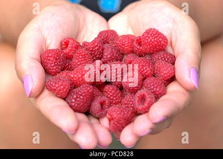 Woman's hands with raspberries in the shape of a heart. - Stock Photo