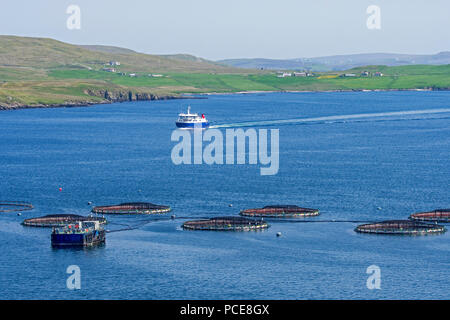 Aquaculture installation / sea cages / sea pens / fish cages at salmon farm in Laxo Voe, Vidlin on the Mainland, Shetland Islands, Scotland, UK - Stock Photo