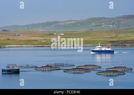 Ferry boat Linga sailing past sea cages / sea pens / fish cages from salmon farm in Laxo Voe, Vidlin on the Mainland, Shetland Islands, Scotland, UK - Stock Photo