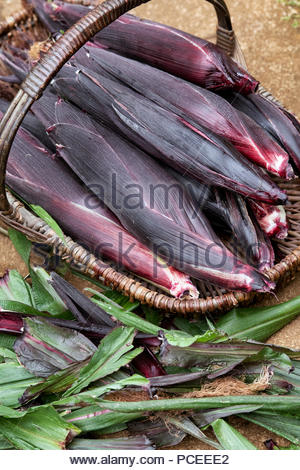 Zea mays. Double red sweetcorn in a wicker basket in an english garden. UK - Stock Photo