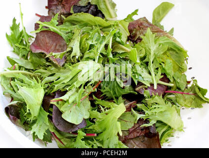Fresh organic spring mix greens in colander after rinsing - Stock Photo