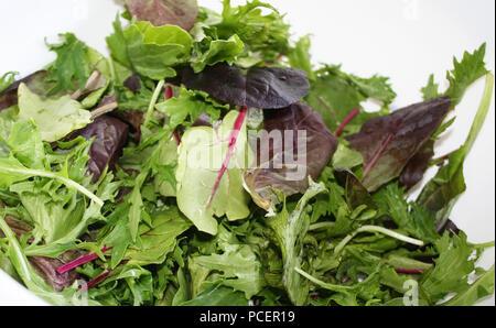 Fresh organic spring mix greens - Stock Photo
