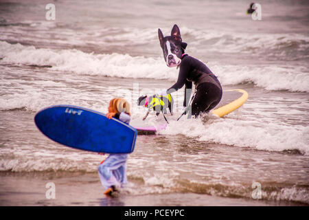 Wearing a dog costume and mask and accompanied by a real dog in a lifejacket, a woman joins in a Halloween costumed surfing event in Huntington Beach, CA, while a child walks by with a junior-size surfboard.  (Photo by Spencer Grant) - Stock Photo