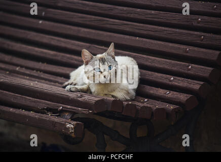 Stray cat on a bench - Stock Photo