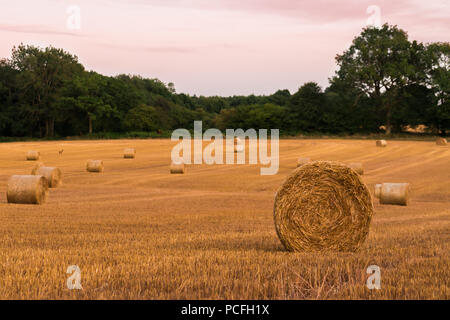 Round hay bales at sunset on farmland in West Sussex, UK, after a prolonged period of dry hot weather creating an early harvest. - Stock Photo