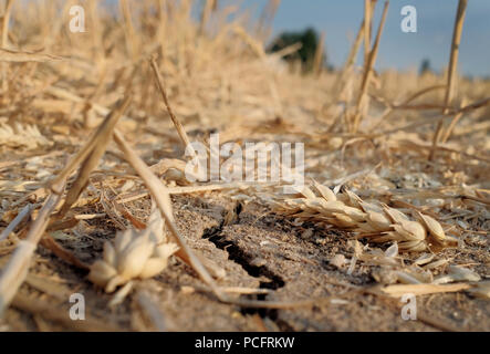 Duisburg, Germany. 02nd Aug, 2018. A crack runs through dry soil in a harvested wheat field. Farmers in many areas of Germany have had to contend with weeks of dry weather. Credit: Martin Gerten/dpa/Alamy Live News - Stock Photo