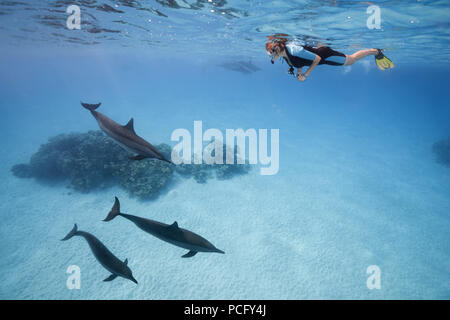 August 1, 2018 - Red Sea, Sataya Reef, Marsa Alam, Egypt, Africa - A woman in a mask and fins swim and look at the Spinner Dolphins  (Credit Image: © Andrey Nekrasov/ZUMA Wire/ZUMAPRESS.com) - Stock Photo