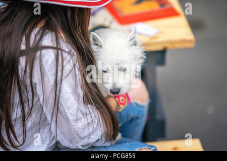 Fluffy cute white dog in the hands of an unrecognizable girl with long hair in a hat, a joint summer vacation in the park - Stock Photo
