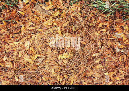 Beautiful close up image shot with colorful yellow red dry autumn fall maple leaves on ground, fall season, view from above, card wallpaper, textured  - Stock Photo