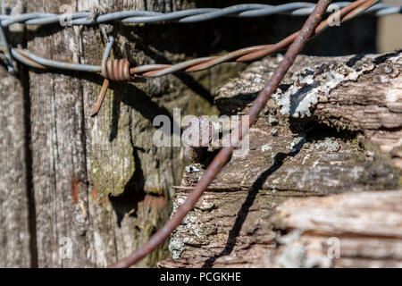 Close-up of nails and barbed wire on a fungus covered fence post. - Stock Photo