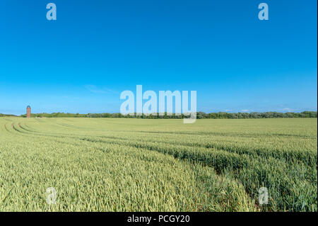 Landscape with cornfield at Cape Arkona and former Marinepeilturm tower in the background, Putgarten, Rügen, Mecklenburg-Vorpommern, Germany, Europe - Stock Photo