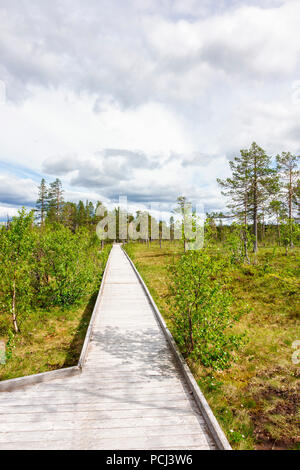 Disabled boardwalk in the woodland - Stock Photo