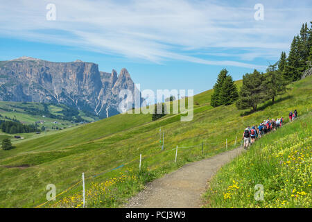 Hiking group on a path in a beautiful alpine landscape with flowering meadows - Stock Photo
