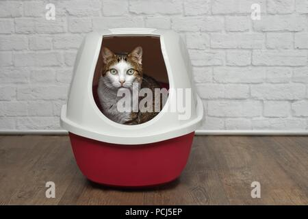 Cute tabby cat sitting in a red litter box and looking to the camera. - Stock Photo