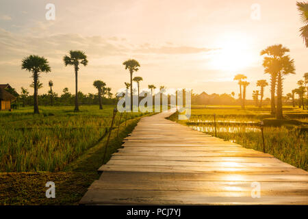 Wooden deck causeway bridge running through grass field and palm tree plantation in Siem Reap (Angkor), Cambodia. - Stock Photo