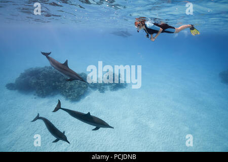 A woman in a mask and fins swim and look at the Spinner Dolphins (Stenella longirostris) - Stock Photo