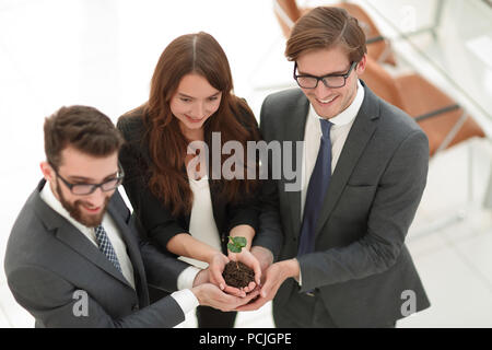 business team protecting hands, small sprout - Stock Photo