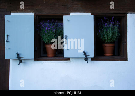 Exterior of house in Basel's Old Town district. Two windows with purple flowers. - Stock Photo