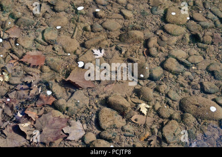 The shallow riverbed rocks shown under the clear water of the Allegheny river in Warren county, Pennsylvania, USA - Stock Photo