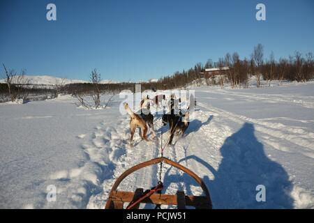Dog sledding tour on a cold and chilly winter day at the mountains of Tromso - Stock Photo