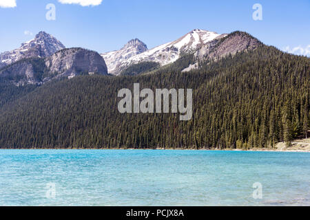 Coniferous woodland on the shore of Lake Louise in the Rocky Mountains, Alberta, Canada - Stock Photo