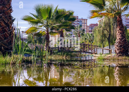 lake and palm trees - Stock Photo