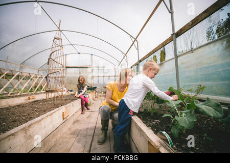 Mother and kids gardening in greenhouse - Stock Photo