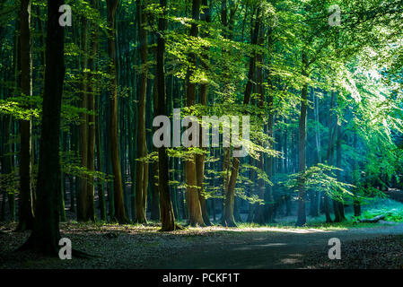 Scenic view of the path through heart of the beech forest at Jasmund National Park. - Stock Photo