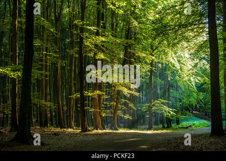 Scenic view of the beech forest - Stock Photo